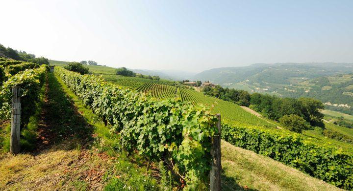 vinas vinos de Catalunya do