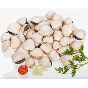 Almeja Blanca 60/80 6kg Cg