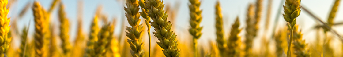 Distribuidores de alimentacion en España cereales