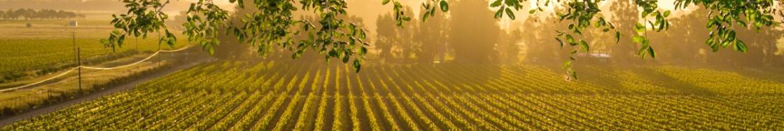 Distribuidora de vinos y cavas al por mayor