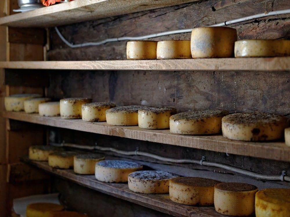 mayoristas de quesos en españa