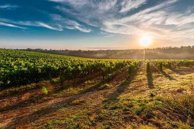 vinos DO cataluña