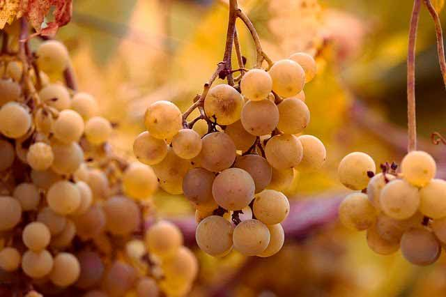 comprar vins del condado de huelva blancs