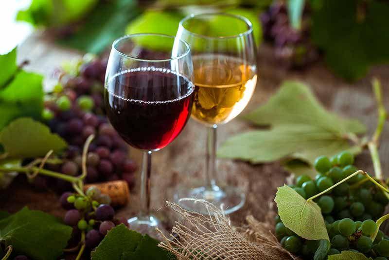 vinos do montsant