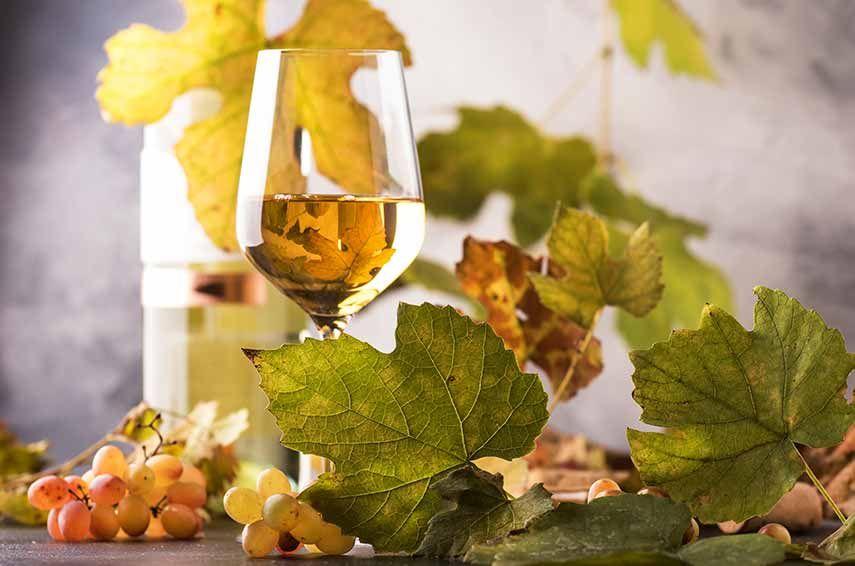 vins do montsant blanc