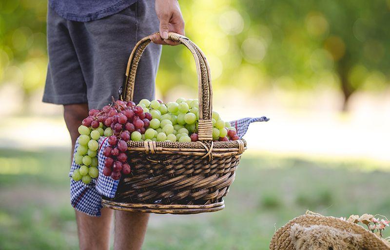 do terra alta vino